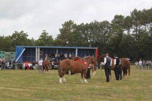 le concours du cheval breton