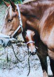Expo cheval breton novembre 2017 site